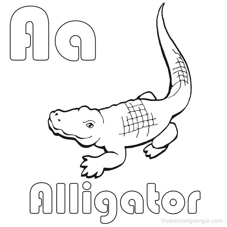 787x787 Alligator Coloring Pages Cartoon Alligator Coloring Page Baby