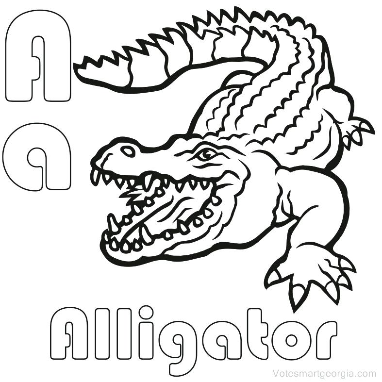 787x787 Alligator Coloring Pictures Baby Alligator Coloring Pages Book
