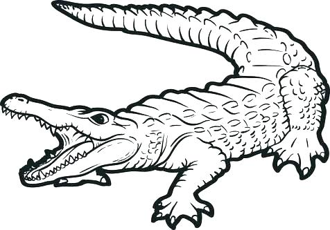 476x333 Baby Alligator Coloring Pages Alligator Coloring Pages Alligator