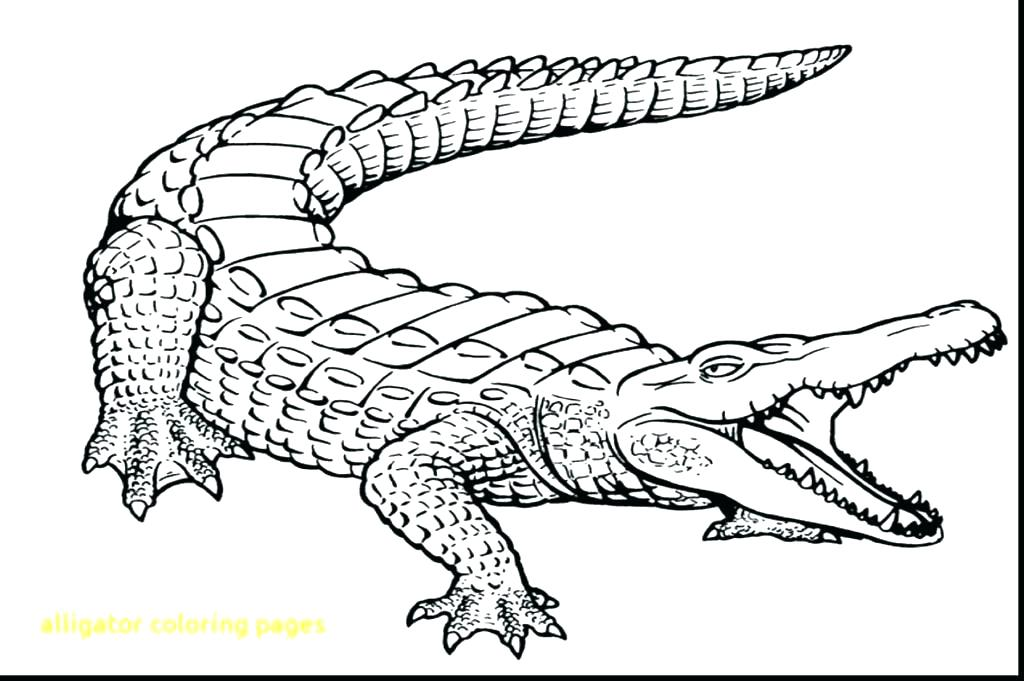 1024x681 Alligator Coloring Page Alligator Coloring Page Cool Alligator