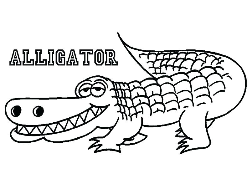805x604 How To Color Alligator Coloring Pages On Coloring Page Alligator