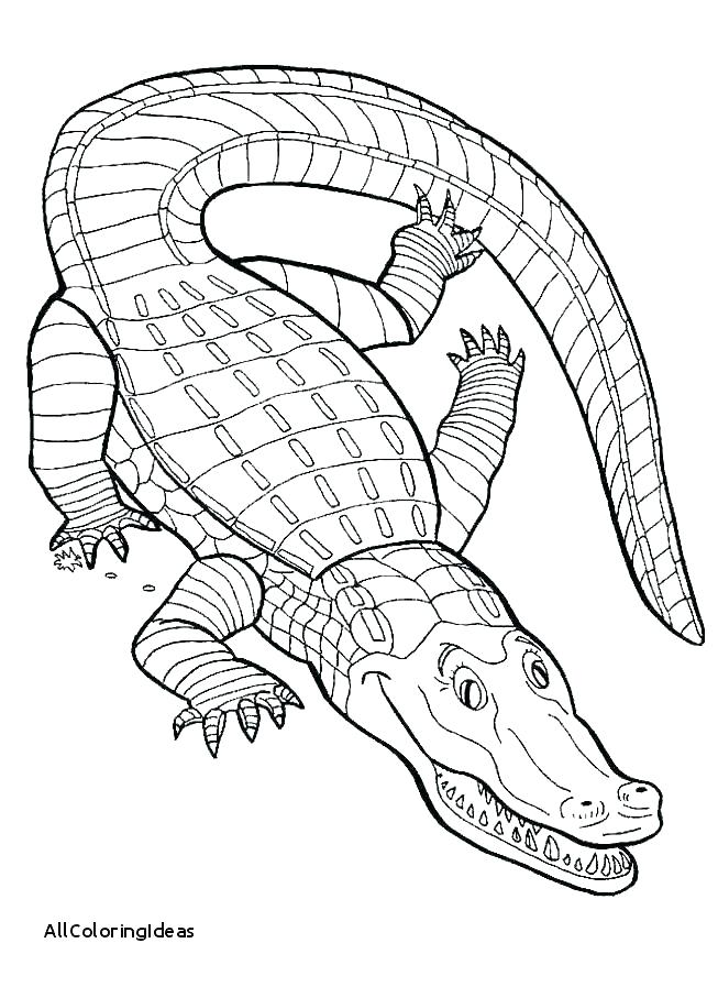 653x897 Alligator Coloring Pages For Kids Deepart