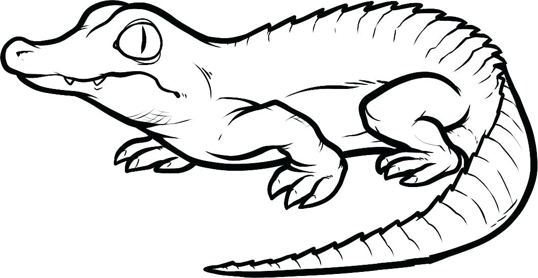 1059x547 Alligator Coloring Pages Alligator Coloring Book As Well As
