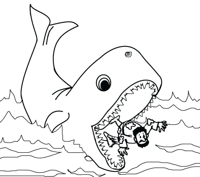 678x600 Blue Whale Coloring Page Humpback Whale Coloring Page And