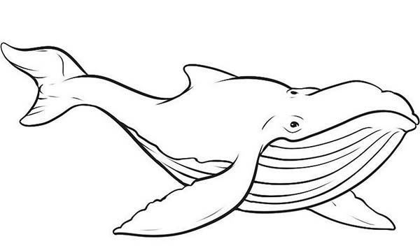 600x352 Blue Whale Coloring Pages Computer