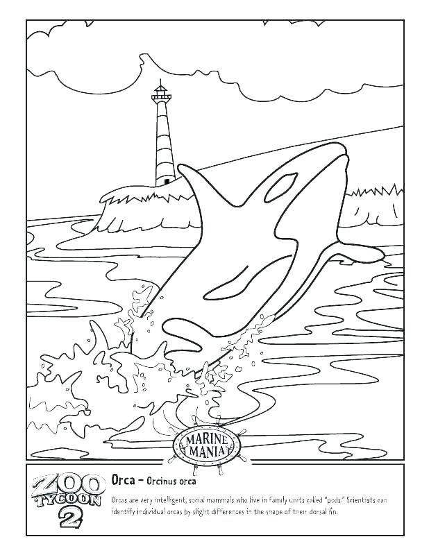 618x800 Blue Whale Coloring Pages Whale 2 Big Blue Whale Coloring Page