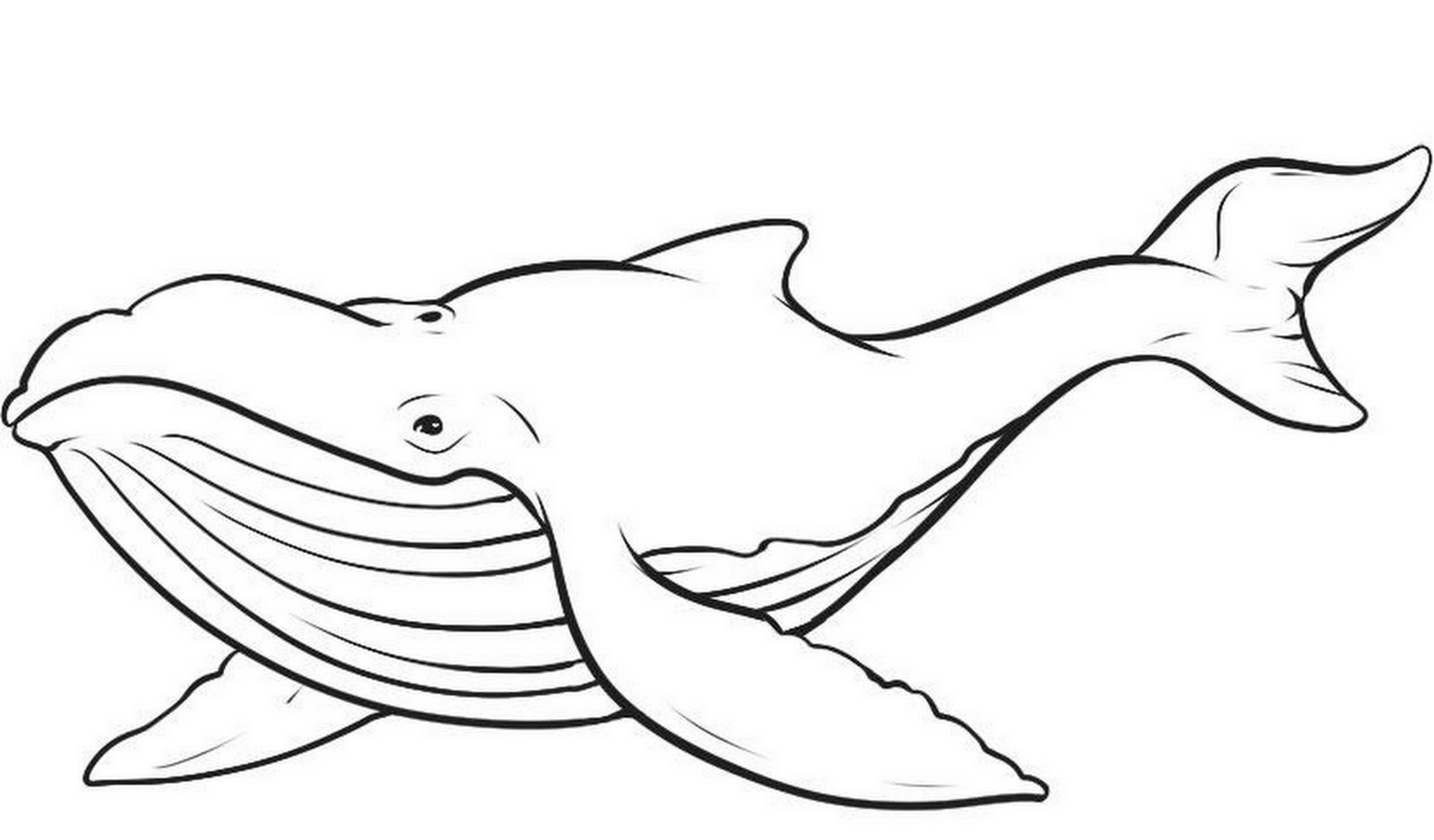 1600x938 Whale Coloring Pages