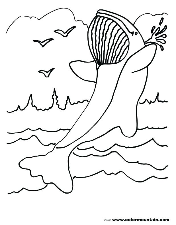 618x788 Whale Coloring Pages Coloring Pages Coloring Page Blue Whale