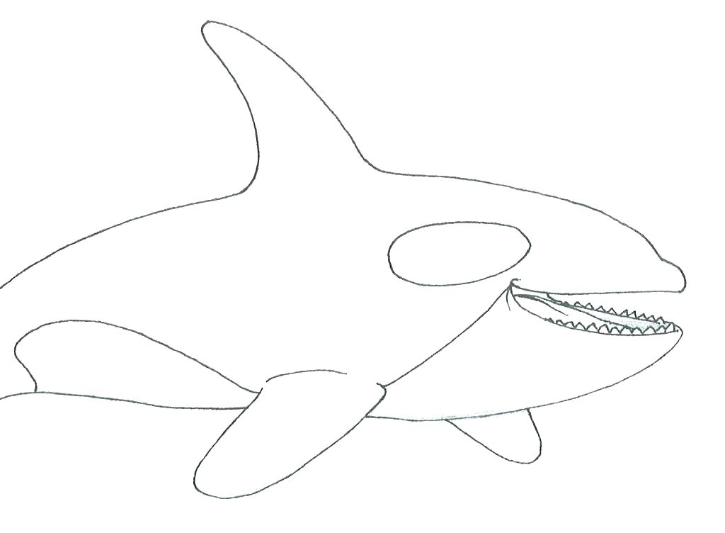 1024x752 Whales Coloring Pages Whale Coloring Pages Killer Whale Coloring