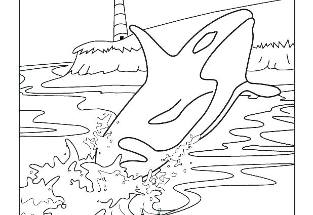 618x425 Big Blue Whale Coloring Page Dolphins And Whales Pages Colouring X