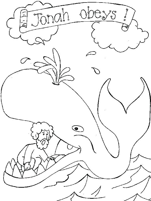 600x800 Big Blue Whale Coloring Page Whales Pages Free