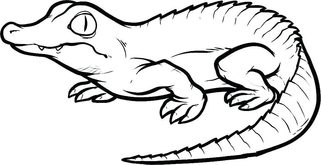 Cartoon Alligator Coloring Pages