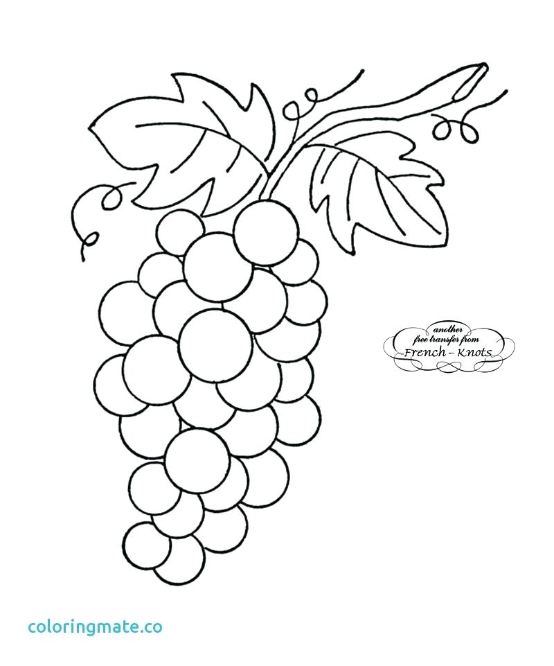 800x961 Grape Vine Art Grapes Coloring Page Best Of Grape Vine Clip Art