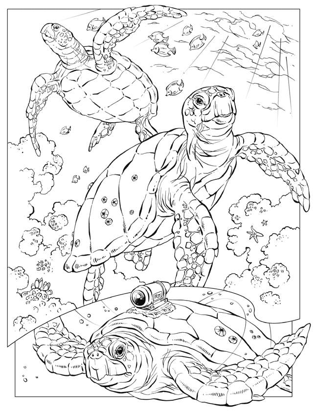 Coloring Pages For Adults Ocean