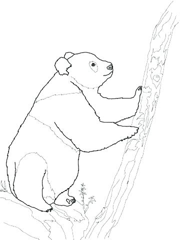 360x480 Bear Coloring Pages Cute Panda Coloring Pages Panda Bear Coloring