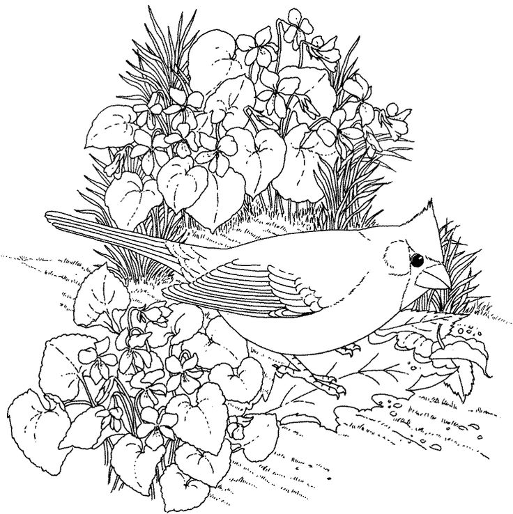 736x738 Bird Coloring Pages For Adults 1000 Images About Animais