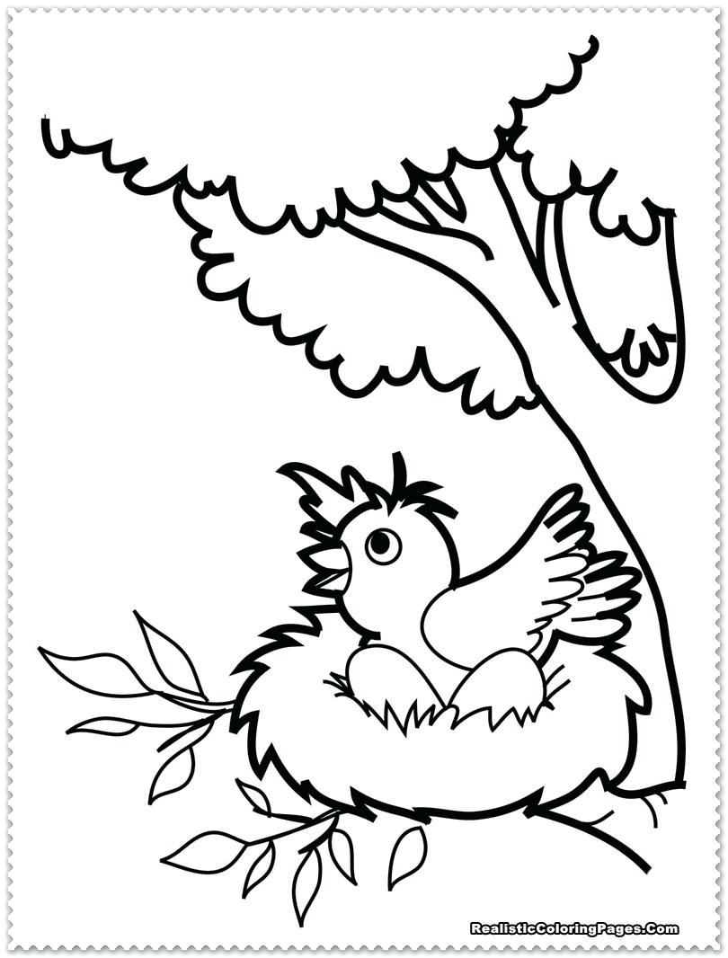 810x1066 Bird Coloring Pages For Preschoolers