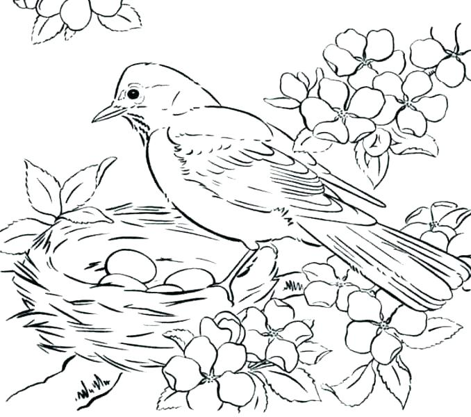 678x600 Coloring Birds Coloring Pages Birds Free Coloring Pages Birds Bird