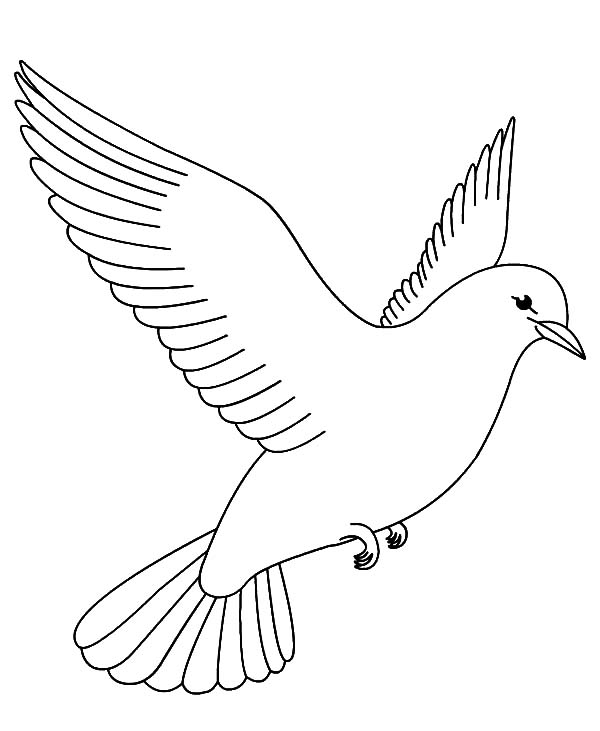 600x731 Coloring Pages For Birds Coloring Page