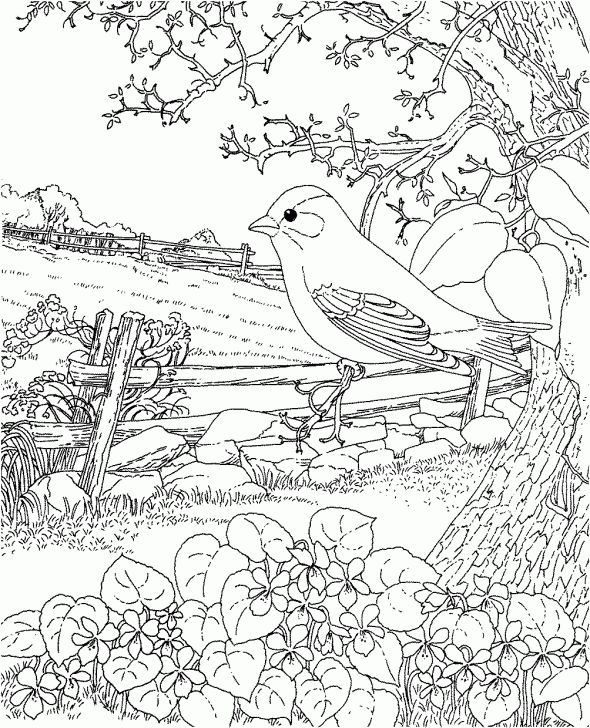 590x728 72 Best Adult Coloring Pages Images On Coloring Books