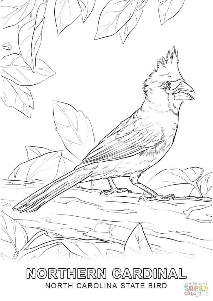725x1024 North Carolina Coloring Pages North State Bird Coloring Page Free