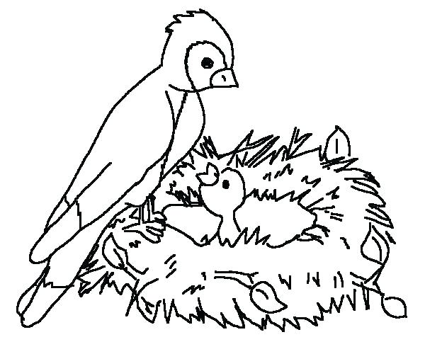 600x500 Robin Bird Coloring Pages Related Post Robin Bird Colouring