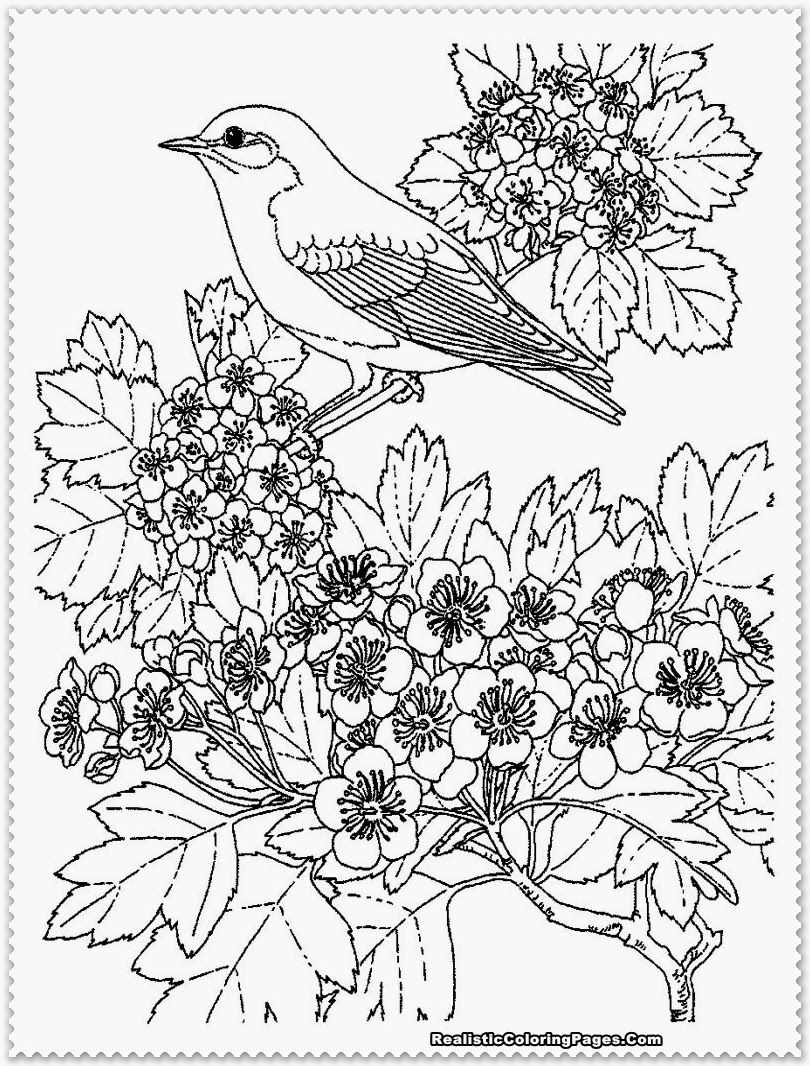810x1066 This Is Not Just Printable Coloring Pages For Girls Only But Also