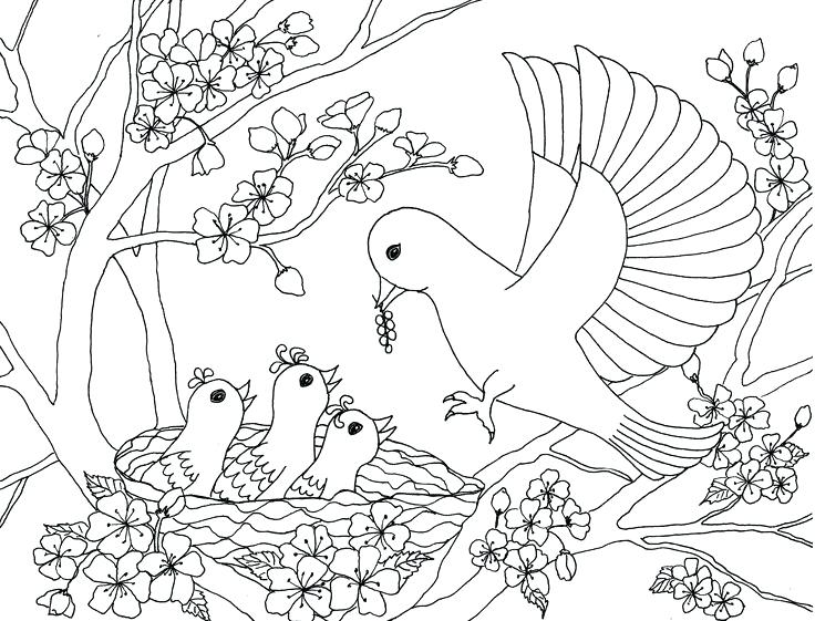 736x561 Best Birds Insects Etc Coloring Pages Images On Birds And Insects