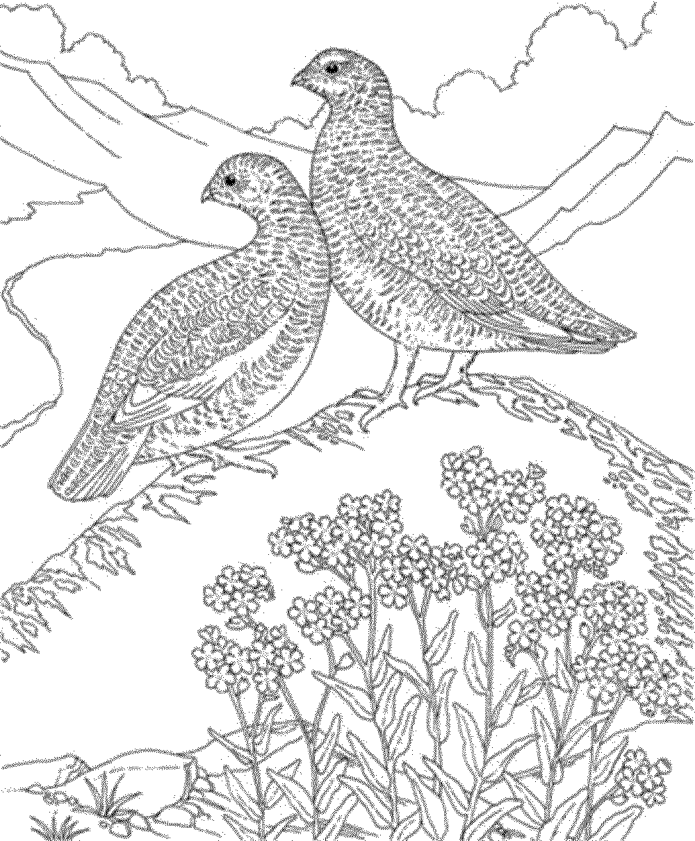1000x1211 Bird Coloring Pages For Adults Ebestbuyvn.co