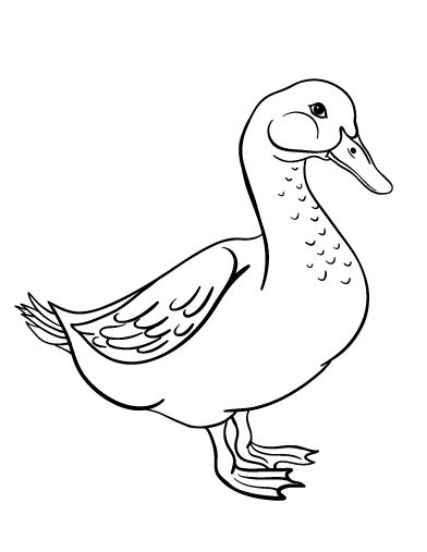 Flying Geese Coloring Pages