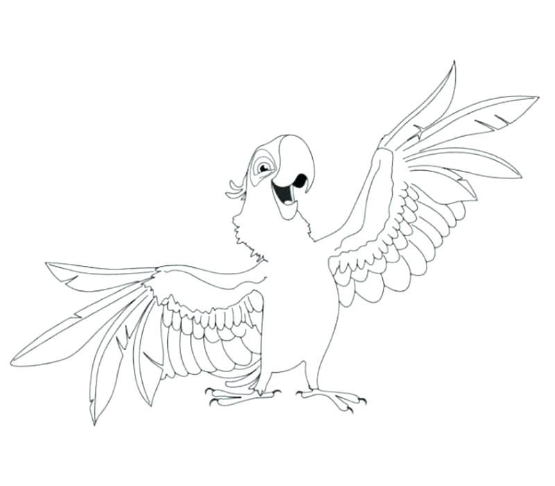 800x700 Coloring Pages Of Parrots Parrot Coloring Pages Printable Flying