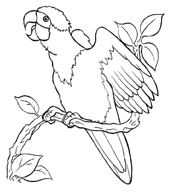 717x793 Flying Parrot Coloring Pages Free Printable For Kids Free Coloring