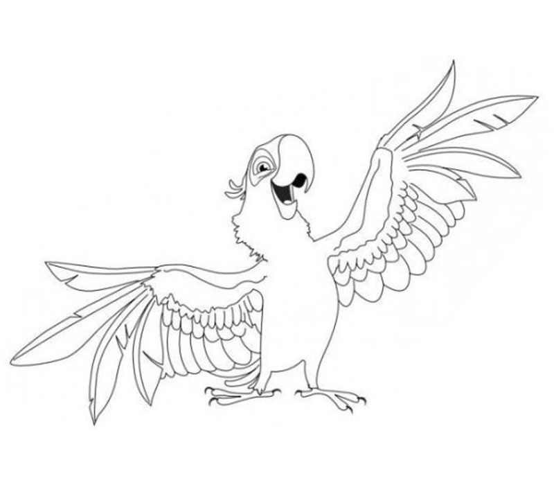 800x700 Parrot Coloring Pages 17 Hd Coloring Pages