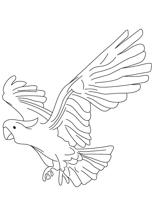 613x860 Parrot Coloring Pages Hook Pirate And His Parrot Coloring Pages