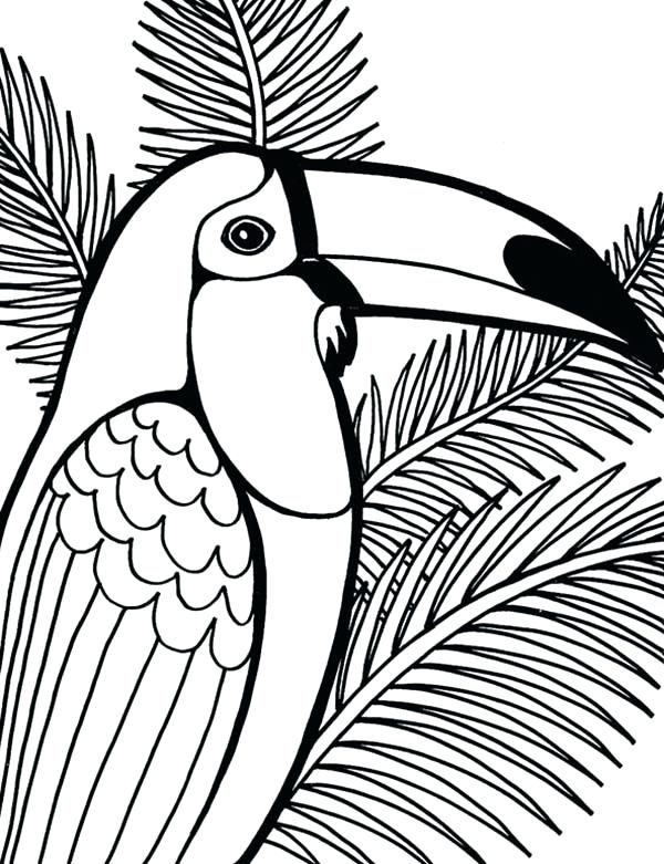 600x781 Parrot Coloring Pages Parrot On Coconut Tree Coloring Page Flying