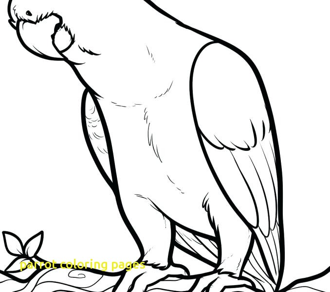 678x600 Parrot Coloring Pages With Free Printable Parrot Coloring Pages