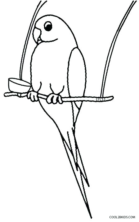 448x716 Coloring Pages Birds Flying