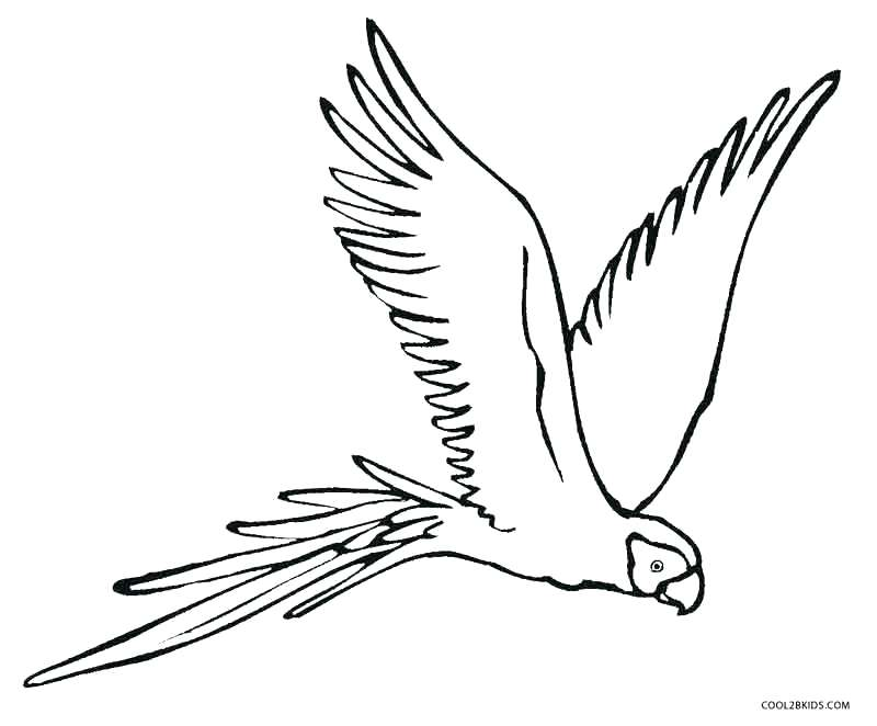 800x662 Parrot Coloring Page Impair.co