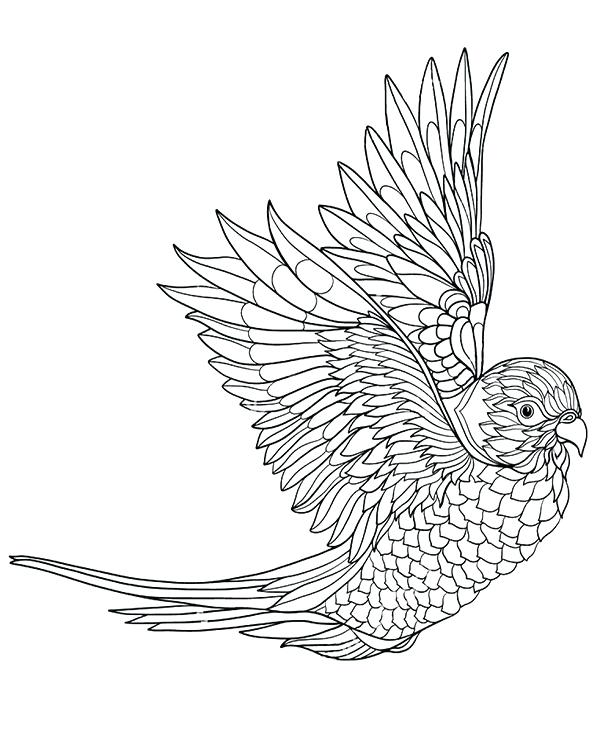 600x740 Parrots Coloring Pages