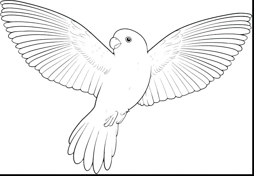 863x597 Coloring Page Of A Bird Glamorous Coloring Page Bird Free Angry