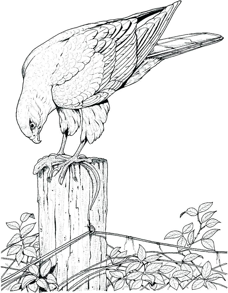 736x944 Coloring Pages Of Birds Coloring Pictures Of Birds Flying Coloring