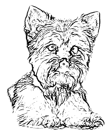Maltese Coloring Pages