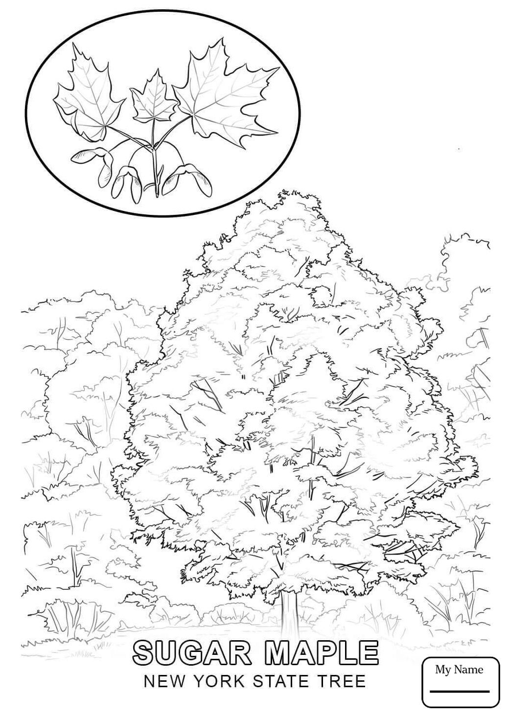 1040x1469 New York State Flag Coloring Page