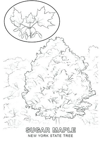 340x480 New York State Flag Coloring Page New State Flag Seal Coloring