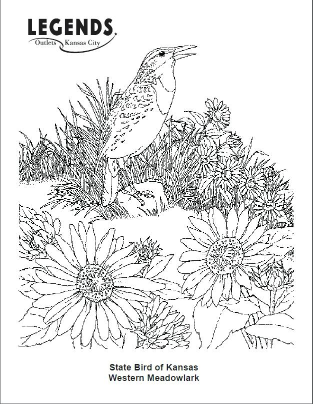 626x807 New York State Flag Coloring Page Western Meadowlark Coloring