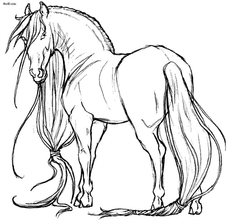 Pinto Horse Coloring Pages