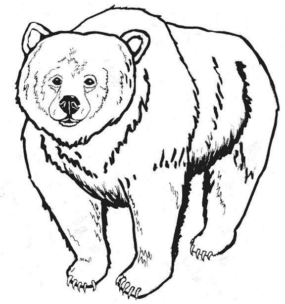 Realistic Bear Coloring Pages