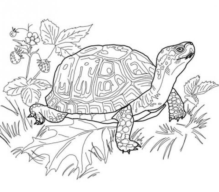 Realistic Coloring Pages For Adults