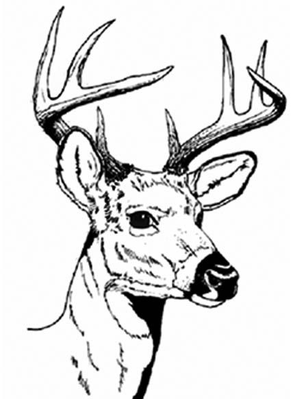 Realistic Deer Coloring Pages
