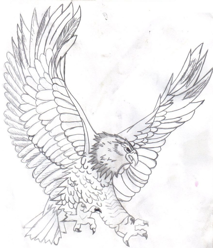 Realistic Eagle Coloring Pages